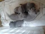 Котенца-Котки