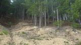 Иглолистна гора-Други Имоти