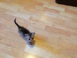 Подарявам коте Кайли-Котки
