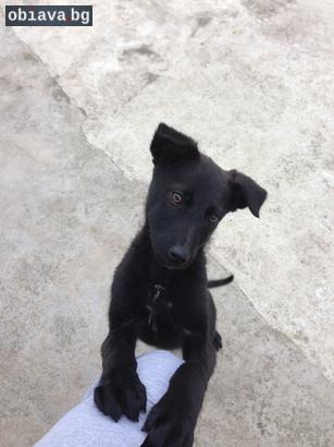 Подарявам малко любвеобилно кученце | Кучета | Габрово