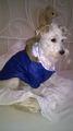 Дрехи за кучета - зимни якета-Аксесоари