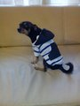 Суичери за кучета-Аксесоари