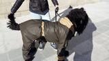 Дъждобран за големи кучета-Аксесоари
