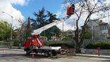 Рязане на дървета Варна-Озеленяване