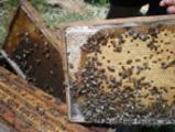 Плодникови пчелни пластмасови основи-Други Любимци