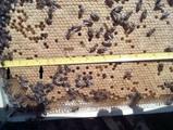 Пчелни пластмасови основи с килийки 4,9 мм.-Услуги