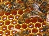 Продавам кошери и пчелни семейства-Паяци и Насекоми