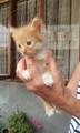 Подарявам котенца - Варна-Котки
