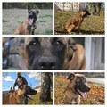 Подарява Куче на 8 – 9 месеца-Кучета