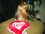 Мини йоркширски териер си търси приятелка-Кучета