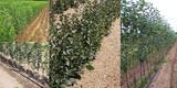 Овощни дръвчета - 10плюс1 - гр. Варна-Дом и Градина