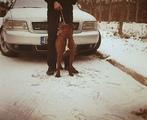 Мъжки питбул-Кучета
