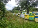 Започнахме записване  за  пчелни отводки за 2017 г.-Други Любимци