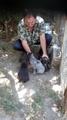 Продавам чистокръвни кученца порода Дратхаар-Кучета
