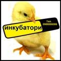 Предлагаме инкубатори за люпене на яйца-Птици