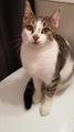 Кротка и умна писана на 7 месеца-Котки